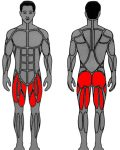 Muscle groups targeted by enhanced MedX Leg Press